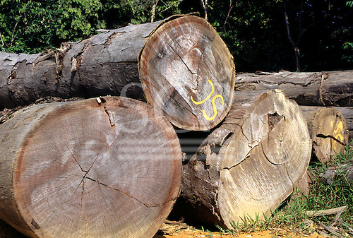La Gongue, Gabon. Cut tree trunks at the side of the road awaiting transport.