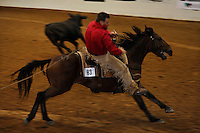 Steve Hayden on Hampton placed 12th in the competition of the first Extreme Mustang Makeover that featured100 Trainers, 100 Mustangs, 100 Days awarding $25,000 prize to the winer.  Mustang Heritage Foundation and the Bureau of Land Management created the competition to raise awareness of the value of mustangs, and to showcase the beauty, versatility, and trainability of these rugged horses.<br /> In an amazing display of horsemanship that included cracking whips, shooting balloons and a chain saw, 12 trainers faced off in the finals. Veteran cutting horse trainer Guy Woods won the event on Max. .An adoption followed the event where one horse brought $58,000 and could have been bought for $125 from the BLM.  The 75 mustangs that made it through the event were adopted for a total of $233,100.