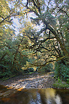 Oparara River. Kahurangi National Park, Buller District. New Zealand. Vertical Format.