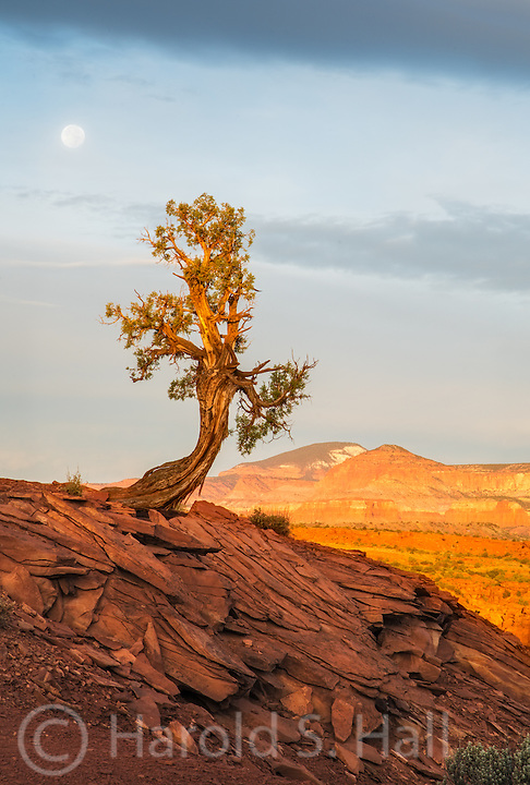 Near the Utah town of Torrey, this is one of the first turnoffs into Capitol Reef National Park.  It is a favorite spot of mine for sunrise and sunset photos or as in this case, a moon set.