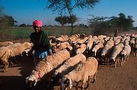 INDIA, Rajasthan, children work as shepherds at their parents farm during the day, at night they attend the Tilonia barefoot college / INDIEN Rajasthan Tilonia , Kinder arbeiten als Hirten tagsueber bei ihren Familien in der Landwirtschaft, abends gehen sie in das barefoot college, eine Abendschule der NGO von Bunker Roy