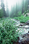misty and wet summer morning at Tyndall Creek in Rocky Mountain National Park, Colorado, USA
