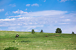 Horse and rider on a trail at the Blue Mountain Recreation area on the west side of Missoula, Montana
