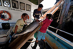 Benoa Harbour tuna fish landing from longliner boats that stay out at sea for a month or longer. Mother boats with a fresh load of ice, pick up tuna from these longliners and bring them to Benoa Harbour for weighing, grading and shipping out to the overseas market.