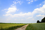 Europa, DEU, Deutschland, Nordrhein Westfalen, NRW, Rheinland, Niederrhein, Toenisberg, Wolfsberg, Agrarlandschaft, Feld, Acker, Getreide, Weizen, Gerste, Anbau, Weg, Feldweg, Kategorien und Themen, Landwirtschaft, Landwirtschaftlich, Agrar, Agrarwirtschaft, Erzeugung, Landwirtschaftliche Produkte, Natur, Naturfoto, Naturfotos, Naturfotografie, Naturphoto, Naturphotographie, Landschaft, Landschaften, Landschaftsfoto, Landschaftsfotografie, Landschaftsphoto, Landschaftsphotographie......[Fuer die Nutzung gelten die jeweils gueltigen Allgemeinen Liefer-und Geschaeftsbedingungen. Nutzung nur gegen Verwendungsmeldung und Nachweis. Download der AGB unter http://www.image-box.com oder werden auf Anfrage zugesendet. Freigabe ist vorher erforderlich. Jede Nutzung des Fotos ist honorarpflichtig gemaess derzeit gueltiger MFM Liste - Kontakt, Uwe Schmid-Fotografie, Duisburg, Tel. (+49).2065.677997, ..archiv@image-box.com, www.image-box.com]