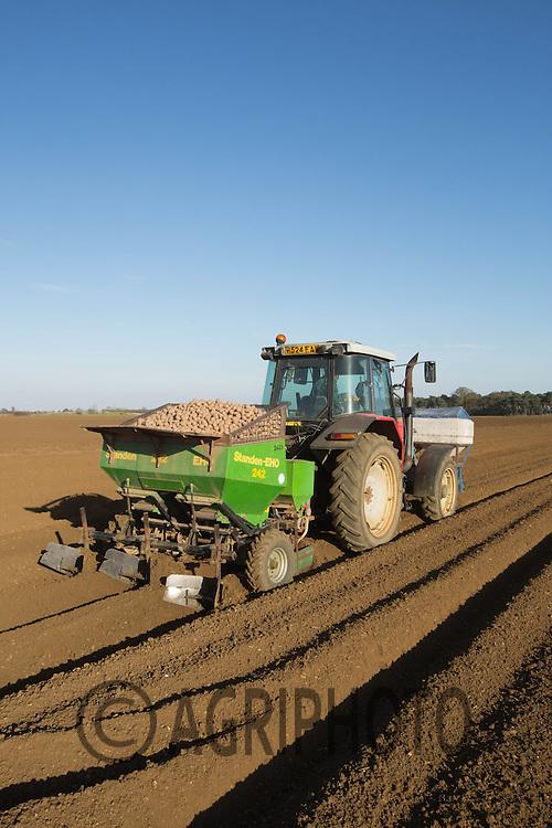 Planting potatoes<br /> Picture Tim Scrivener 07850 303986