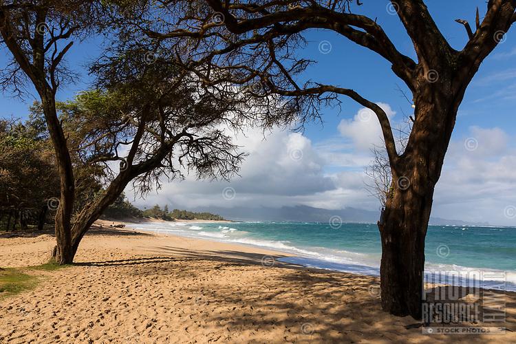 Trees provide a bit of shade at Baldwin Beach, Maui.