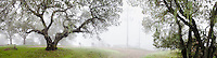 Panorama with oaks, foggy winter morning on Cherry Hill with cell phone towers