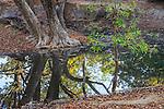 Bandhavgarh National Park, India<br /> <br /> http://www.bandhavgarh-national-park.com/flora-in-bandhavgarh.html