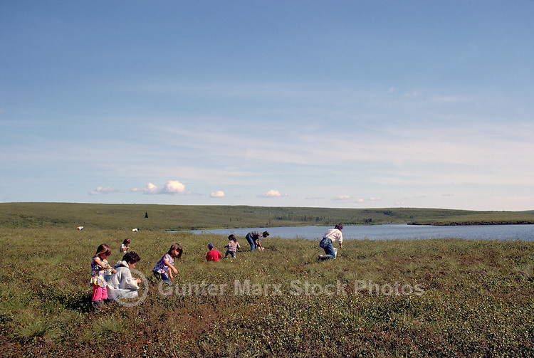 Inuit (Eskimo) People picking Wild Cranberries along Dempster Highway (Hwy 5), Yukon Territory, Canada