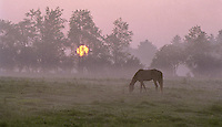 Horses in Scenic Western Maryland