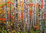 The Northwoods, Superior National Forest, Minnesota, USA<br />