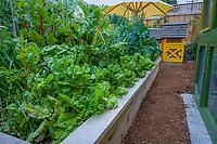 Lush raised bed organic vegetable in backyard garden