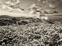 Coquile River Lighthouse with gorse. Bandon, Oregon<br /> <br /> <br /> C00454D-5
