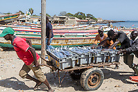 Dakar, Senegal.    Moving a Newly-arrived Load of Fish to the Vendors' Stall, Soumbedioune Fishing Village, now a part of the metropolis of Dakar.