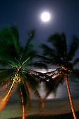 Natal, Brazil. Palm trees blowing gently in the breeze with the sea behind and a hazy moon, with artificial light.