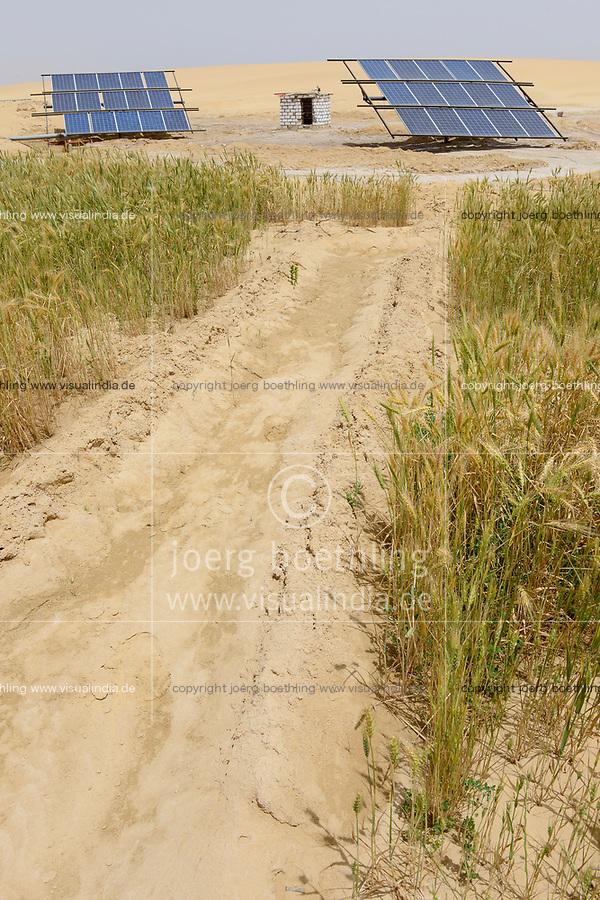 EGYPT, oasis El-Wahat el-Bahariya, desert farming with solar powered pump, wheat field of small scale farmer / AEGYPTEN, Oase Bahariyya, Solar betriebene Pumpe zur Bewaessung eines Weizen Feldes eines Kleinbauern