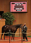 Hip #195 Dixie Union - Princess Falina colt consigned by Margaux farm sold for $300,000 at the Keeneland September Yearling Sale.  September 11, 2012.