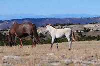 Red Road foal keeps close to its mother.