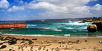 La Jolla Cove beach with many wild harbor seals, brown Pelicans, and western gulls resting on the beach, in front of the Pacific Ocean, California USA