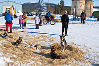 2010 Ultra Sport bicyclist Tracey Petervary rides past Middie Johnson's resting dogs as he leaves the Elim checkpoint, Winter, Alaska