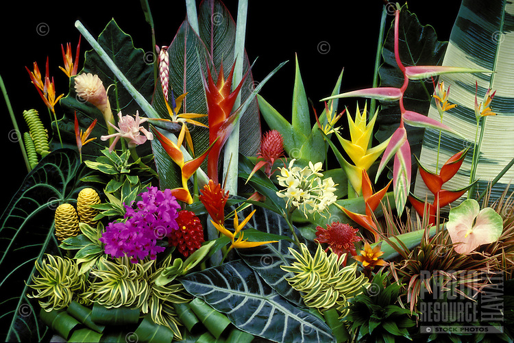 Heleconia and other tropical ornamentals