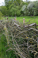 Zaun aus Reisig, Zaun, Begrenzung, Ästezaun, Reisigzaun, Reisighaufen, Ästehaufen, Totholz, Schnittgut aus Ästen und Zweigen wird auf einen Haufen gelegt, als Zaun gestapelt und dient als Lebensraum für viele Tiere, Streuobstwiese, Obstwiese, brushwood, brush-wood