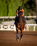OCT 25: Breeders' Cup Juvenile Fillies entrant Bast, trained by Bob Baffert,  gallops at Santa Anita Park in Arcadia, California on Oct 25, 2019. Evers/Eclipse Sportswire/Breeders' Cup