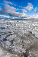 Pancake ice, circular flat pieces of ice are the result of collisions during freeze up on a windy day. Beaufort sea, Barter Island, Alaska.