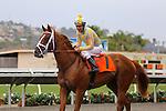 August 2, 2014: Skyway with Stewart Elliott aboard wins the Grade II Best Pal Stakes at Del Mar Thoroughbred Club in Del Mar, California. Zoe Metz/ESW/CSM