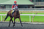 Samuel Dechamplain(6) with Jockey Justin Stein aboard after completing the Summer Stakes at Woodbine Race Course in Toronto, Canada on September 13, 2014 with Jockey Patrick Husbands aboard.