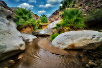 Small stream in Borrego Palm Canyon . Anza Borrego State Park, California