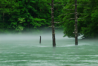 Green on green. Between mountains, hidden by cloud, mist rises from the from the blue-green waters of Taisho-ike during the rainy season, Kamikochi, Japan.