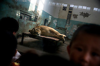 Visitors crowd around a panther in a small concrete and glass enclosure at the Tianjin Zoo in Tianjin, China.