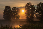 A foggy sunrise over a northern Wisconsin meadow.