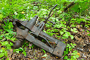 Artifact (old blacksmith vise) at logging Camp 22 along the East Branch & Lincoln Railroad (1893-1948) in Lincoln, New Hampshire. This logging camp was located along the North Fork Branch of the EB&L Railroad in today's Pemigewasset Wilderness. The removal of artifacts from federal lands without a permit is a violation of federal law.