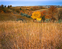 Fall color in the Dakota Badlands; Theodore Roosevelt National Park, ND