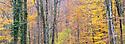 Beech woodland {Fagus sylvatica} showing autumn colours, Plitvice Lakes National Park, Croatia. November. Digitally stitched panorama.