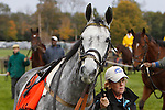 17 October 2009:  Slip Away, a 6-year-old gelding by Skip Away, walks in the paddock before race 3, the Appleton Hurdle Stakes at Far Hills Race Meeting. Trained by Thomas Voss, he finished 7th.  Far Hills, New Jersey.