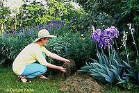 HB05-131x  English Cottage Garden - mulching plants - Bearded Iris
