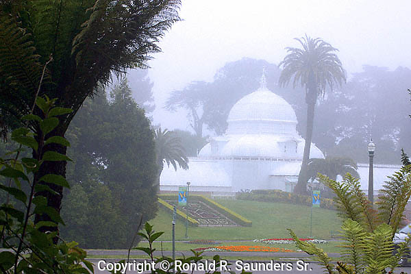 FOGGY DAY AT SAN FRANCISCO'S OBSERVATORY OF FLOWERS