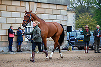 GBR-Rosalind Canter presents Izilot DHI during the CCI-L 3* First Horse Inspection. 2021 GBR-Saracen Horse Feeds Houghton International Horse Trials. Hougton Hall. Norfolk. England. Wednesday 26 May 2021. Copyright Photo: Libby Law Photography