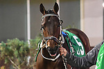 February 13, 2021: Señor Buscador in the Risen Star Stakes at Fair Grounds Race Course in New Orleans, Louisiana. Parker Waters/Eclipse Sportswire/CSM