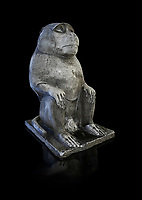 Plaster cast of an ancient Egyptian Thot Baboon statue, reign of Nectanebo (359-342 BC). Campo Marizo, temple of Isis. Egyptian Museum, Turin. black background<br /> <br /> The original is in the Capitoline Museum Rome. The baboon is an image of Thot, lunar God, creator of hieroglyphic writing and patron of science.