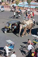 Jaipur, Rajasthan, India.  Mid-day Traffic in Downtown Jaipur.  Motorbikes, Rickshaws, Taxis, Pedestrians, and an Elephant all share the Road.