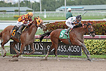 HALLANDALE BEACH, FL - FEBRUARY 06:     Kelly Tough #5 with Paco Lopez on board,  breaks his maiden on Donn Handicap Day, defeating Happy's Causeway #6 with Luca Panici up by 1 3/4 lengths  at Gulfstream Park on February 06, 2016 in Hallandale Beach, Florida. (Photo by Liz Lamont)