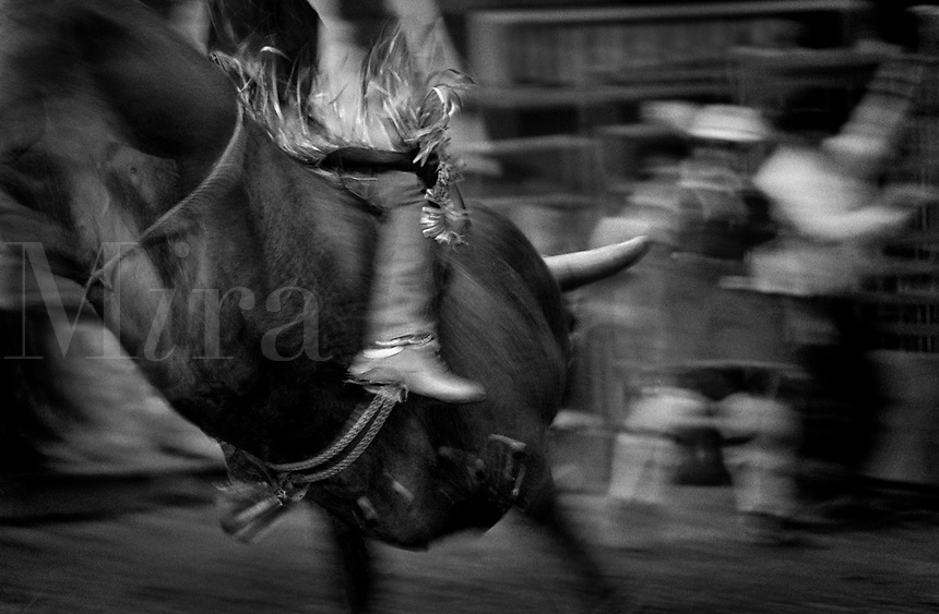 Black & white image of a rodeo - Cowboy rides bull while others scatter. Rodeo clown. United States Rodeo.
