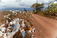 garbage, Scrubs and trees filled with plastic bags, down wind from a landfill site on the island of Maui, Hawaii, Pacific Ocean, A state wide ban on plastic bags went into effect in January 2011.
