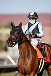 AUG 22: Red Lark (IRE), and jockey Drayden Van Dyke after their stunning victory in the Grade I  Del Mar Oaks with jockey Drayden Van Dyke aboard, in Del Mar, California on August 22, 2020. Evers/Eclipse Sportswire/CSM