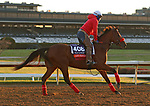 Lady Prancealot, trained by trainer Richard Baltas, exercises in preparation for the Breeders' Cup Filly & Mare Turf at Keeneland Racetrack in Lexington, Kentucky on November 3, 2020.